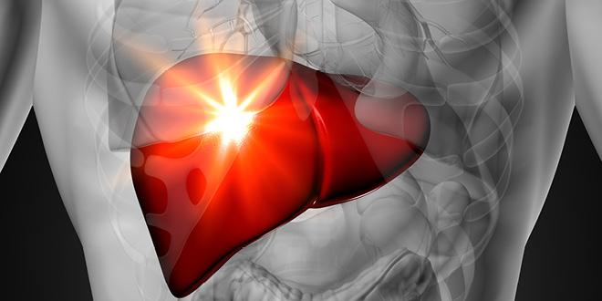 Liver-male-w